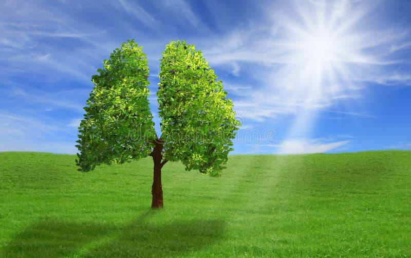 在肺形状, eco概念的树 图库摄影
