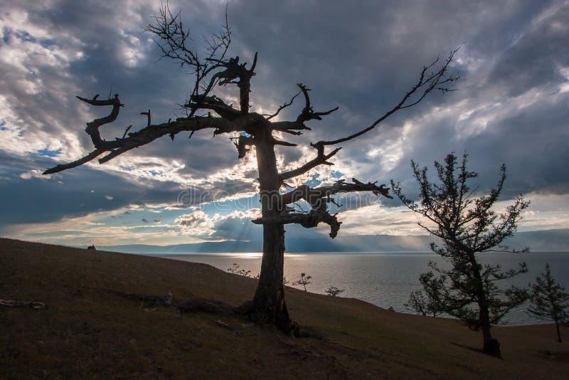 在背后照明的两棵树在贝加尔湖岸的晚上  库存照片