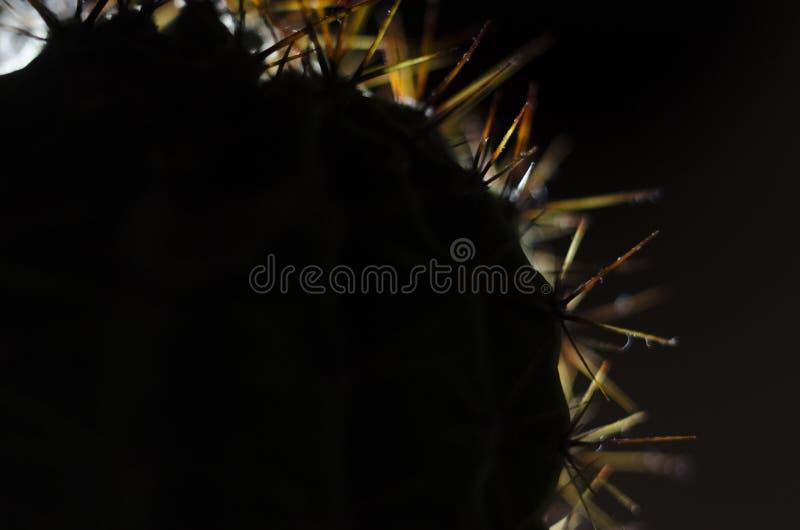 在背后照明的仙人掌针 免版税库存图片