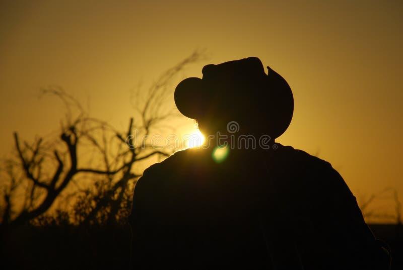 在背后照明的放牛者的外形 库存照片