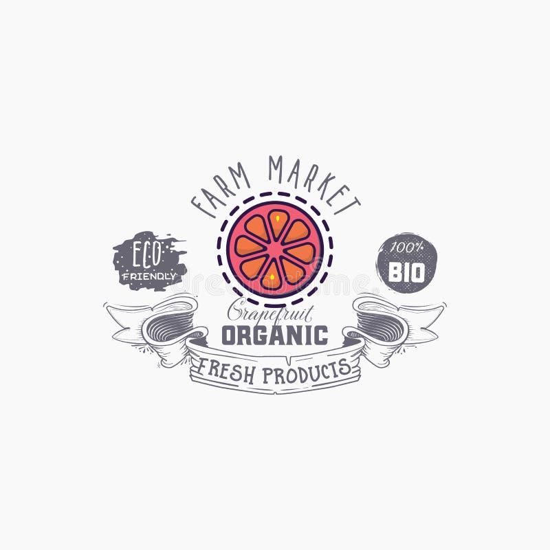 在背景例证的葡萄柚词 果子网元素,被隔绝的传染媒介 库存例证