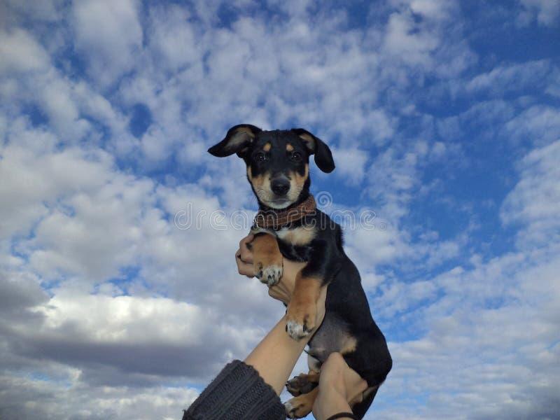 在背景天空的小狗 免版税库存照片