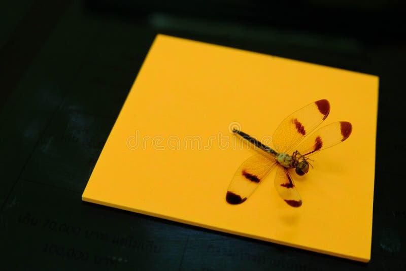 在背景橙色纸和黑色的死的蜻蜓  免版税图库摄影