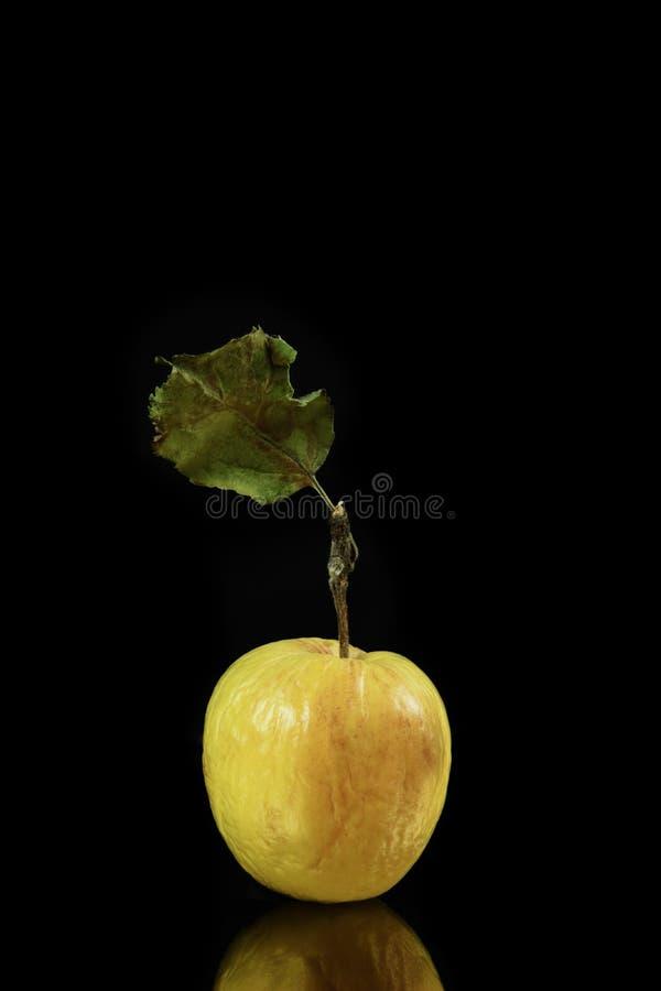 在背景的干苹果 库存照片
