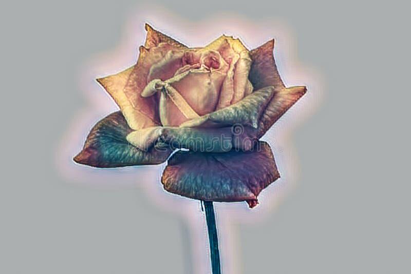 在背景的抽象黄色玫瑰 库存例证