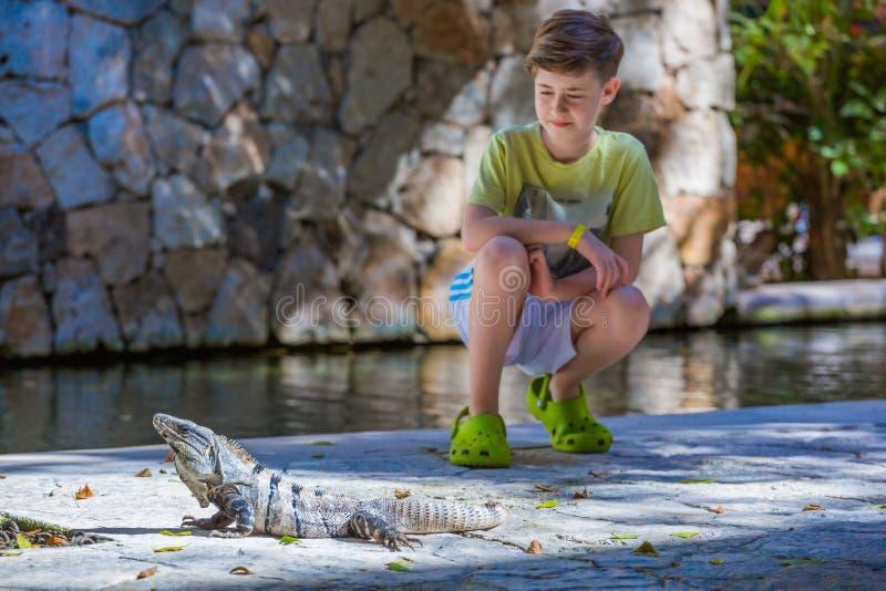 在背景的男孩就座与鬣鳞蜥 库存照片