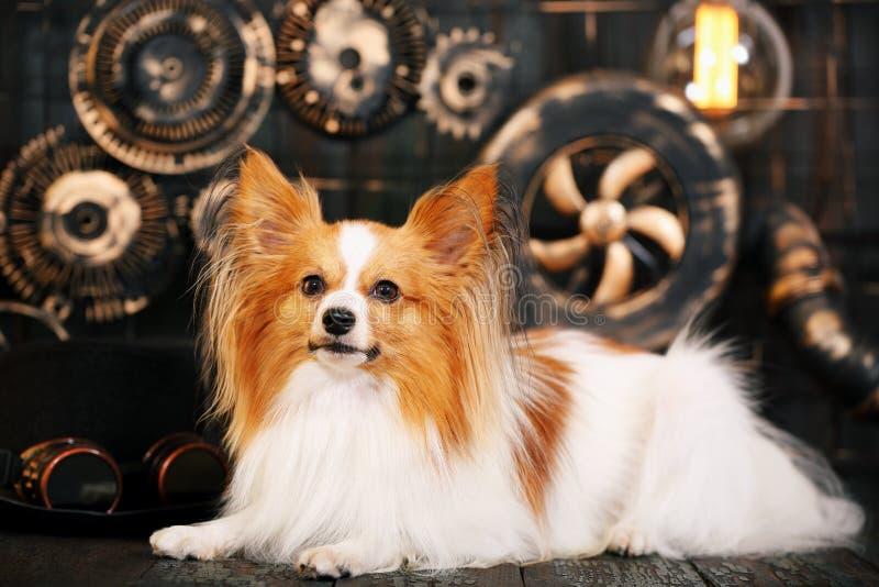 在背景的红色狗仿照steampunk样式 库存照片