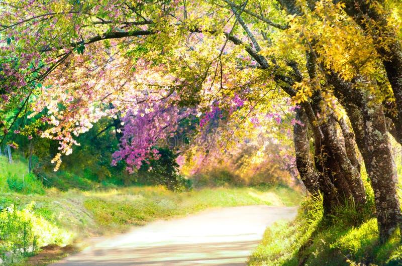 在背景的美丽的公园弄脏风景走道 免版税库存图片