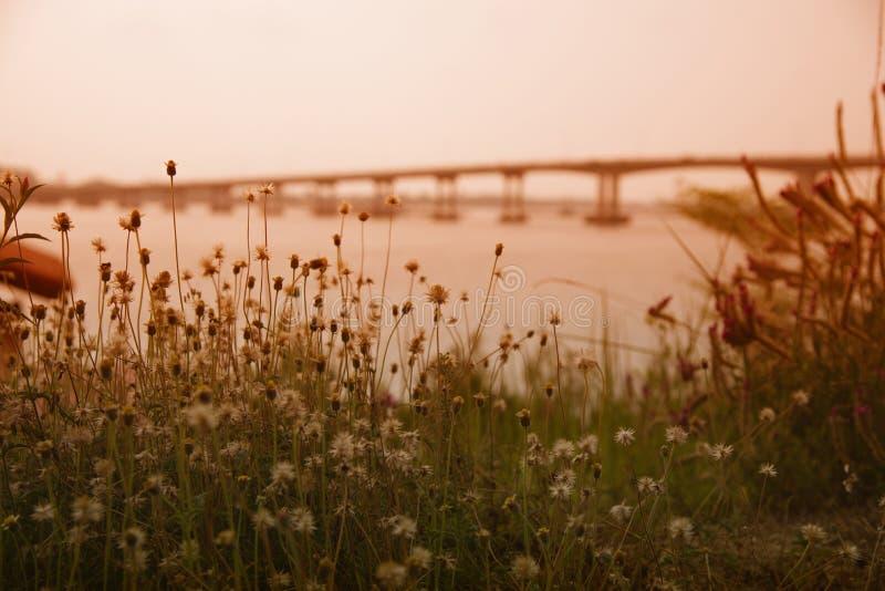 在背景迷离桥梁的草花 库存照片