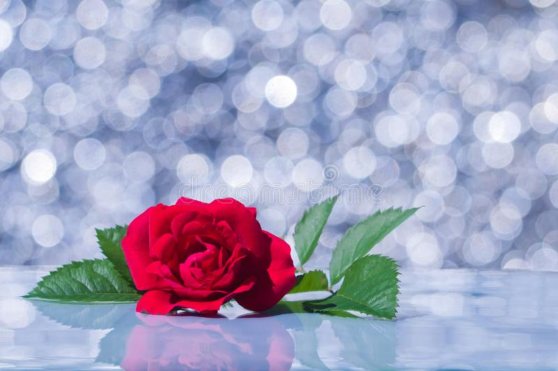 在背景bokeh的红色玫瑰 免版税库存照片