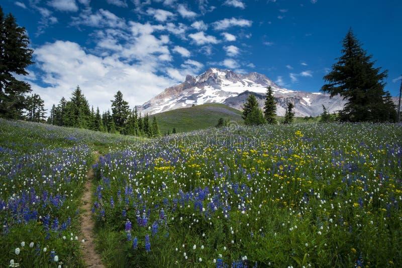 在胡德山,俄勒冈倾斜的供徒步旅行的小道落下 免版税库存图片