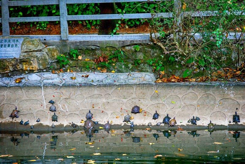 在能仁寺的乌龟,白云山,中国 免版税图库摄影