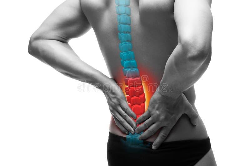 在脊椎,一个人的痛苦以腰疼,在人的后面的伤害,按摩脊柱治疗者治疗概念隔绝在白色背景 免版税库存照片