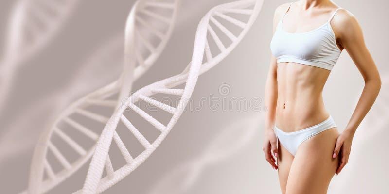 在脱氧核糖核酸词根附近的完善的运动的女性身体 好新陈代谢概念 免版税库存照片