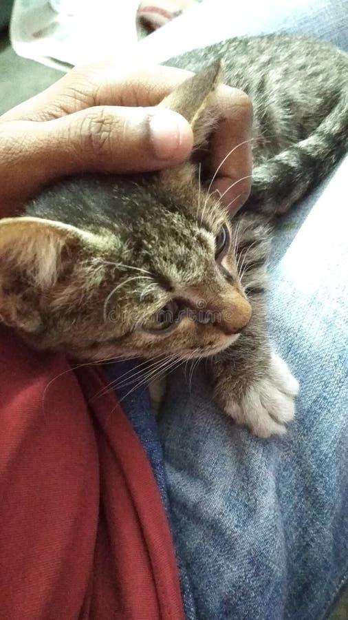 在膝部的猫 免版税库存照片