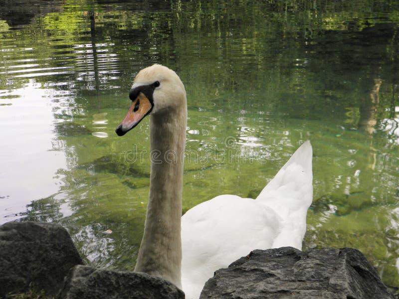 在自然世界的美丽的鸟  免版税库存图片