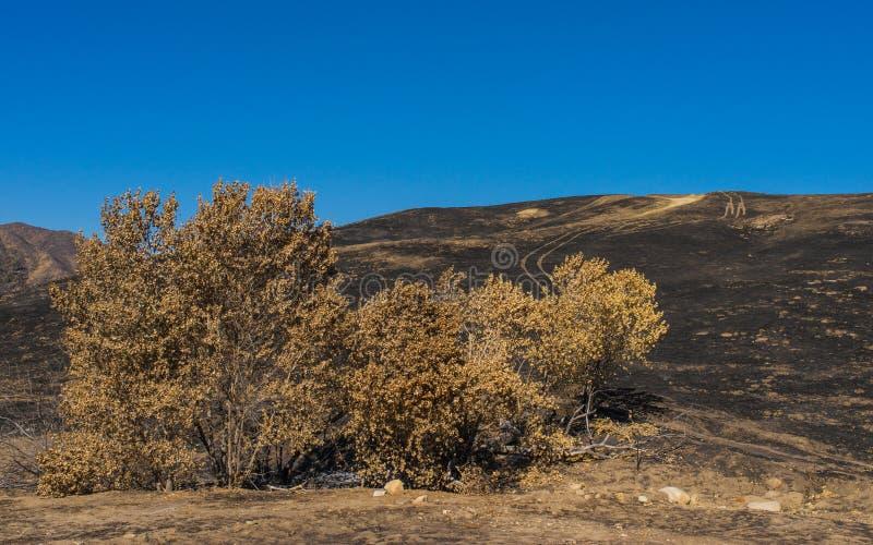 在自然保护区的被烧的树 库存图片