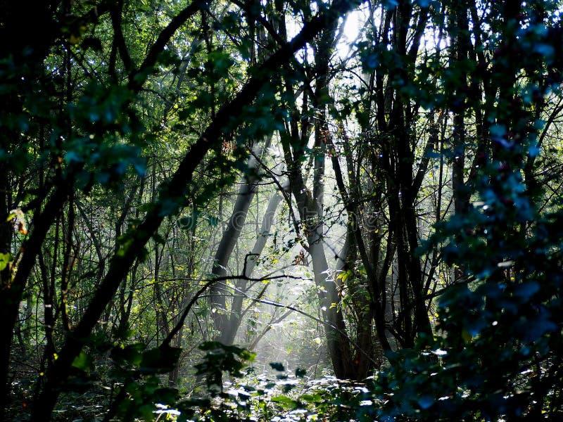 在自然保护的早晨阳光在莫策尔附近 比利时 免版税库存图片