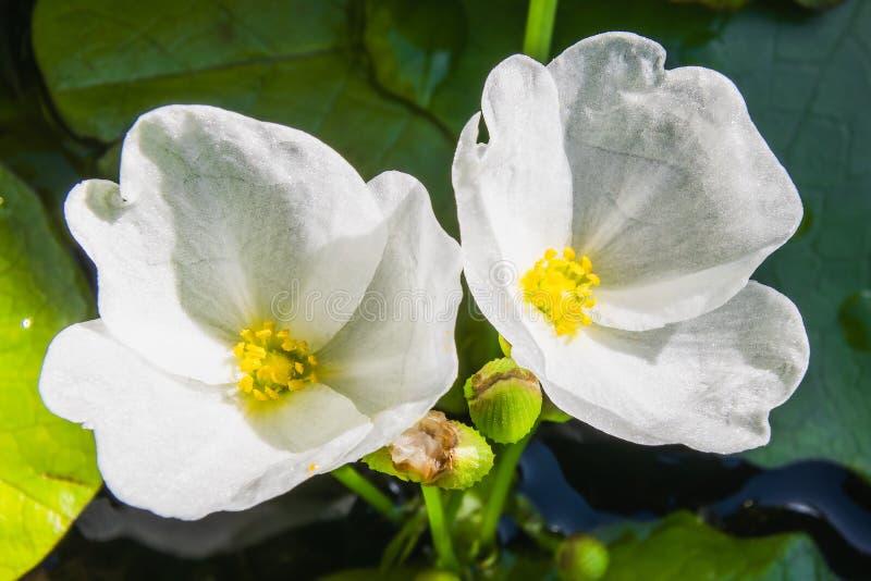 在自然光的浪端的白色泡沫花 库存图片