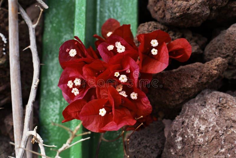 在自然和金属之间的红色花 免版税库存图片
