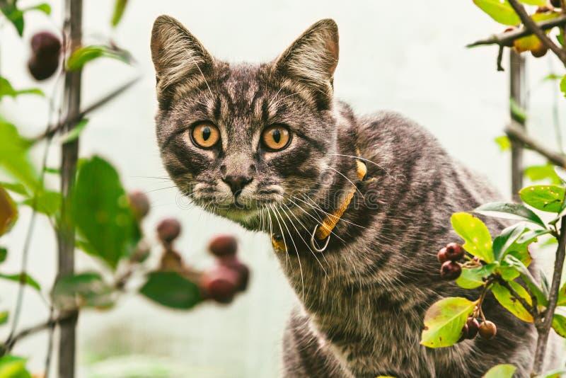 在自然狩猎的一只小猫 库存照片