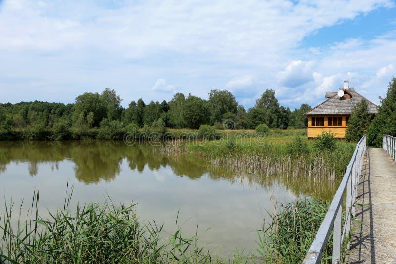 在自然的夏天风景 免版税库存照片