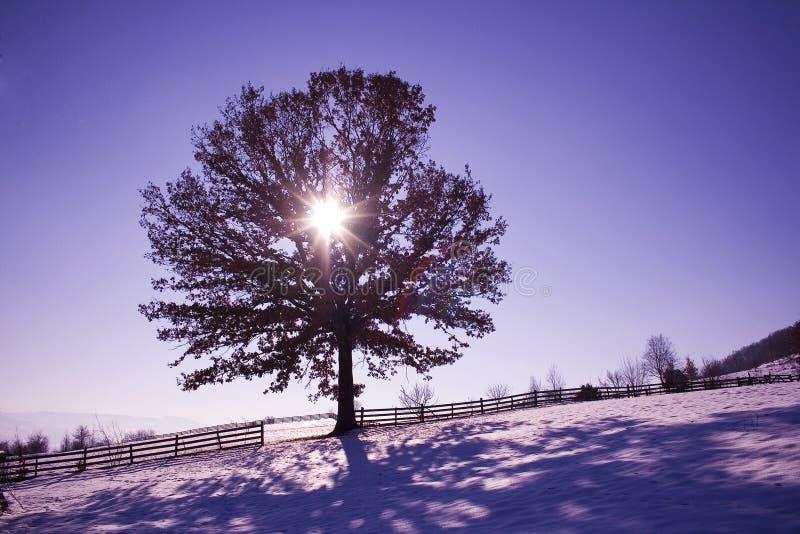 在自然的树 免版税库存照片