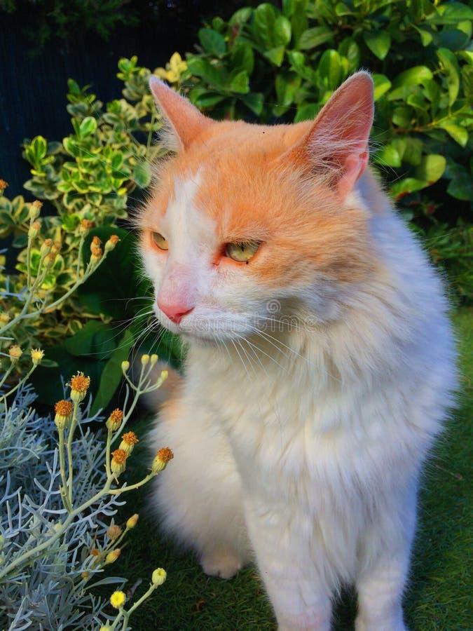 在自然的猫 免版税库存图片