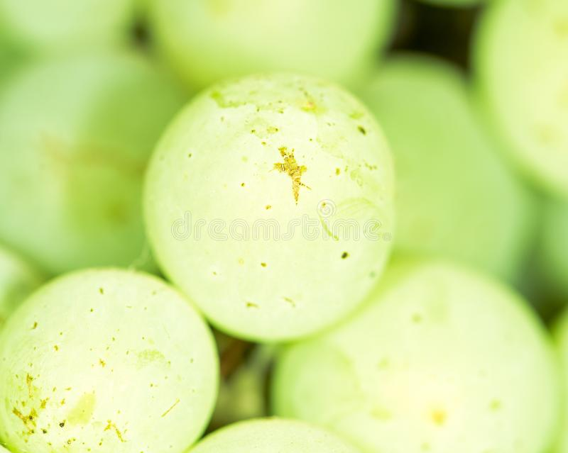 在自然的绿色葡萄 库存照片