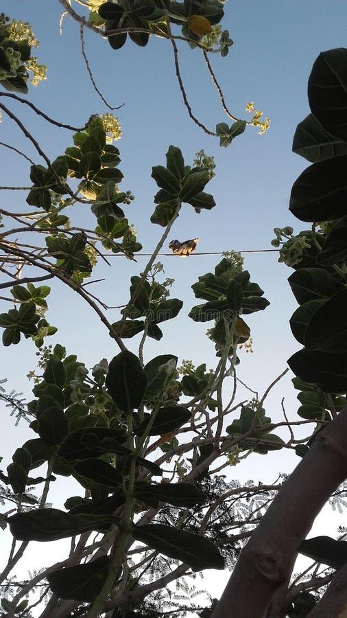 在自然的美丽的猫头鹰 库存照片