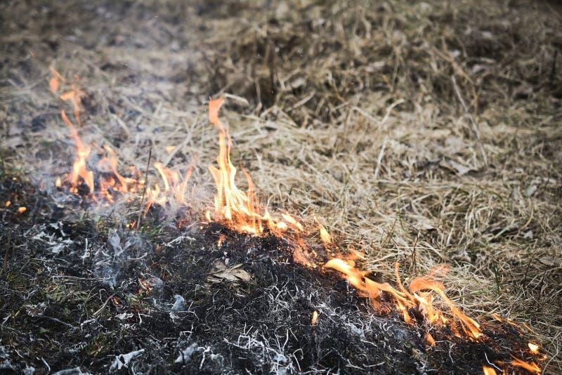 在自然的草火 库存图片