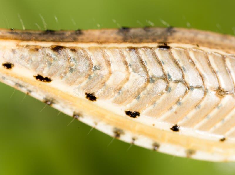 在自然的蚂蚱` s爪子 库存照片