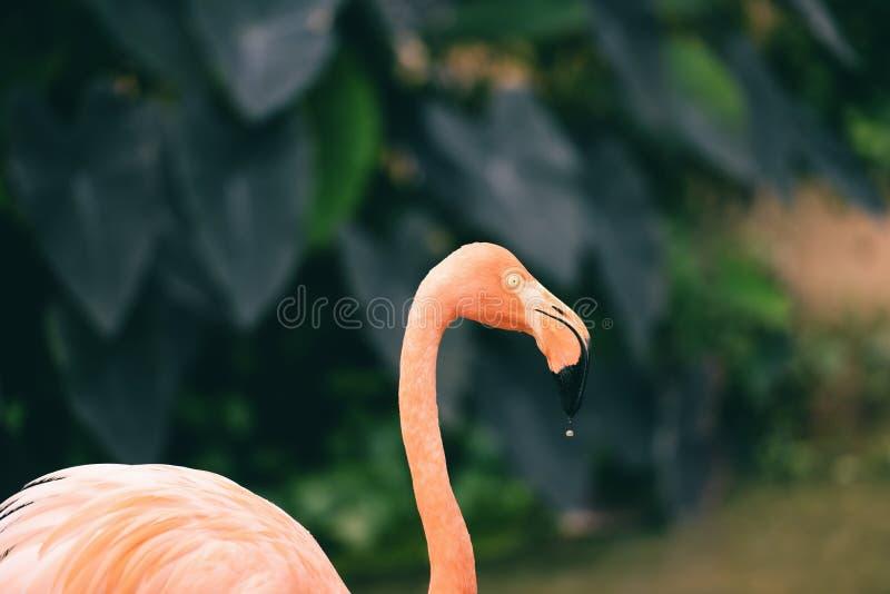 在自然绿色热带植物背景-加勒比火鸟的美丽的鸟火鸟桔子 免版税库存照片