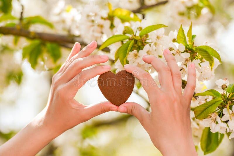 在自然绿色bokeh太阳光火光和迷离叶子摘要背景的女性手心形 愉快的爱和自由概念 库存照片