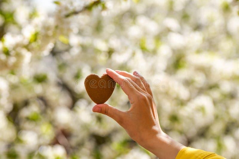 在自然绿色bokeh太阳光火光和迷离叶子摘要背景的女性手心形 愉快的爱和自由概念 库存图片
