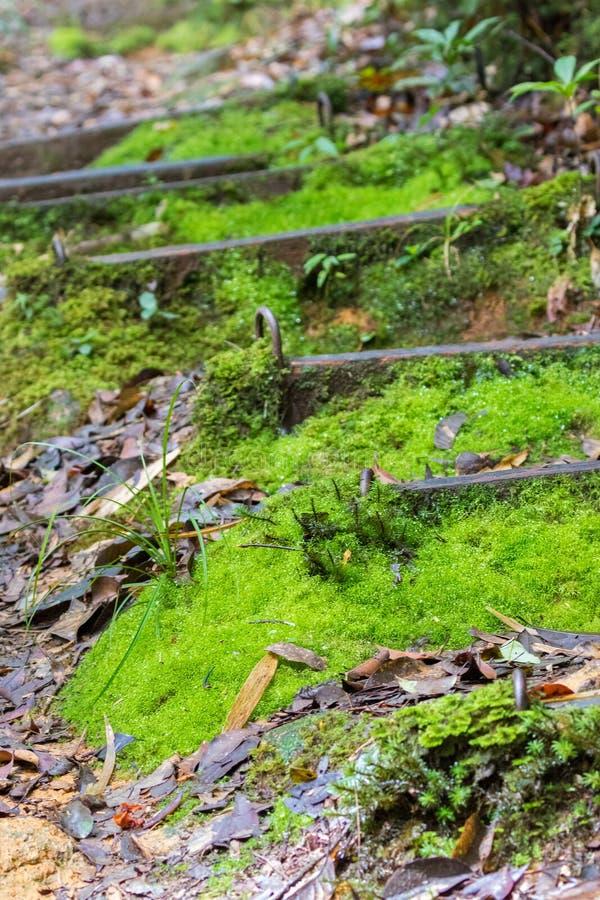 在自然远足的迁徙的足迹的绿色青苔覆盖物台阶在K 免版税库存照片