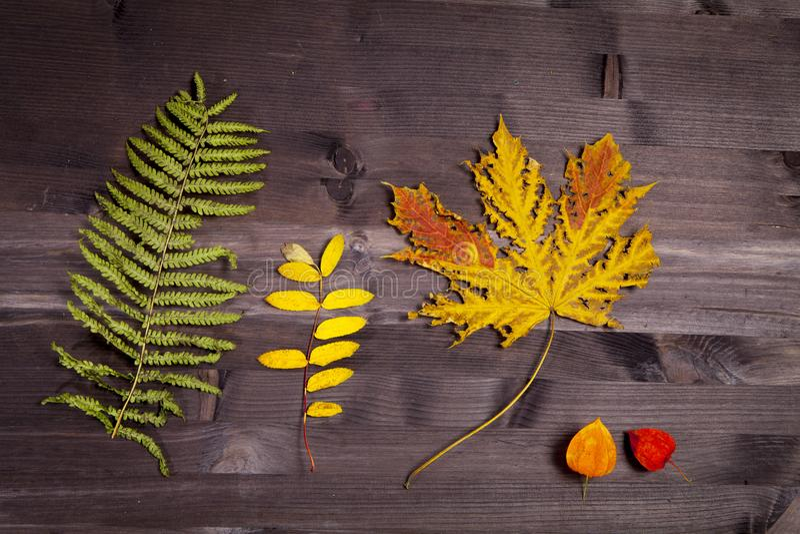 在自然黑暗的木背景的秋叶 老肮脏的木桌或木条地板与结和孔和年迈的partculars 库存图片