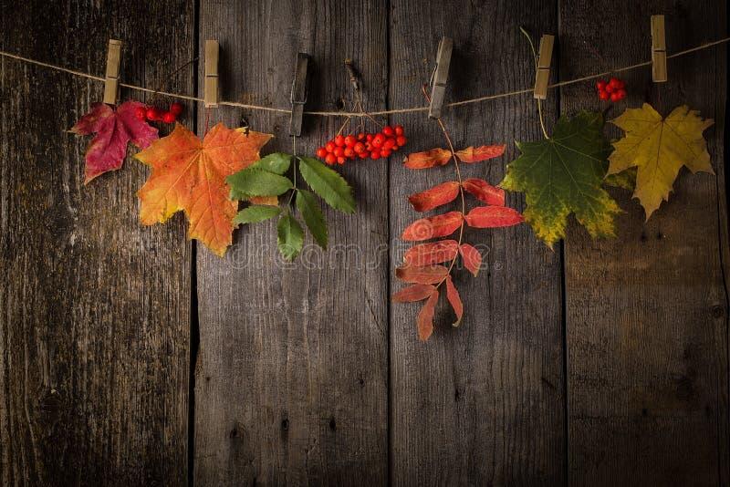 在自然黑暗的木背景的秋叶 图库摄影
