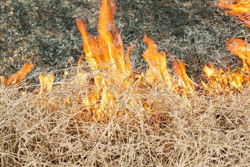 在自然-烧伤的火在领域的一棵草 免版税库存照片