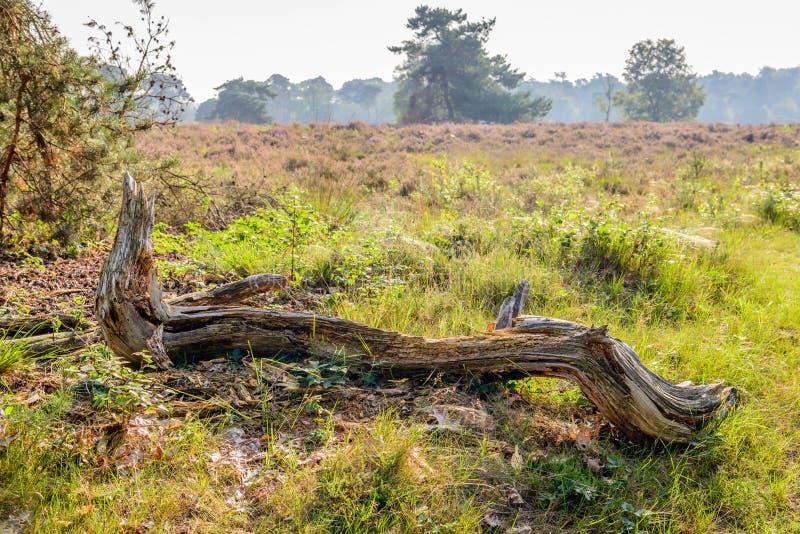 在自然reserv的前景的厚实的被风化的树枝 免版税库存照片