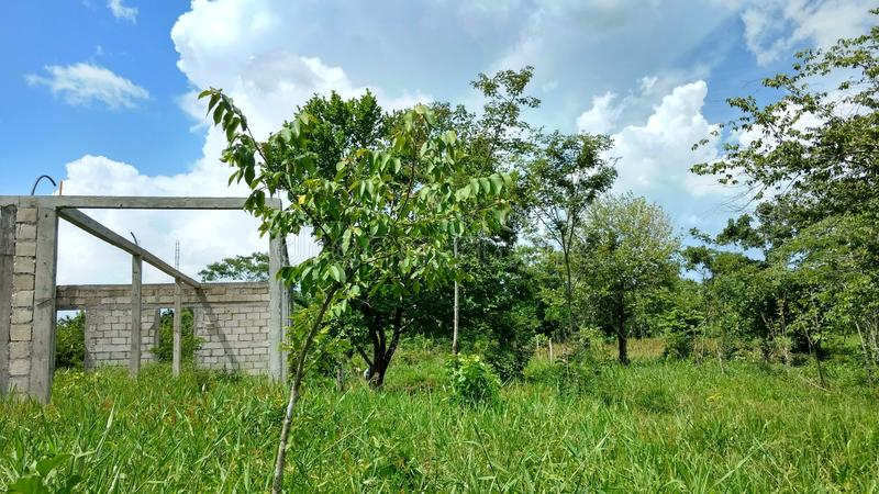 在自由乡下农村,贝登省危地马拉的绿色植被 图库摄影
