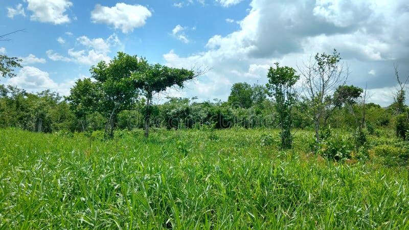 在自由场,贝登省危地马拉的绿色植被 库存照片