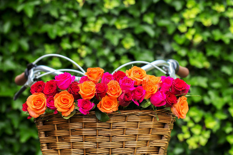 在自行车篮子的多彩多姿的玫瑰花束 库存图片