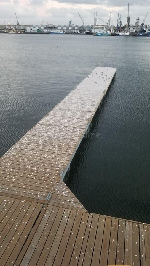 在船坞的海鸥在开普敦 免版税库存图片