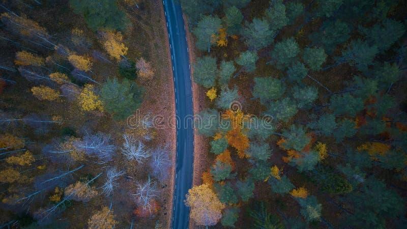 在色的秋天森林鸟瞰图的路 图库摄影