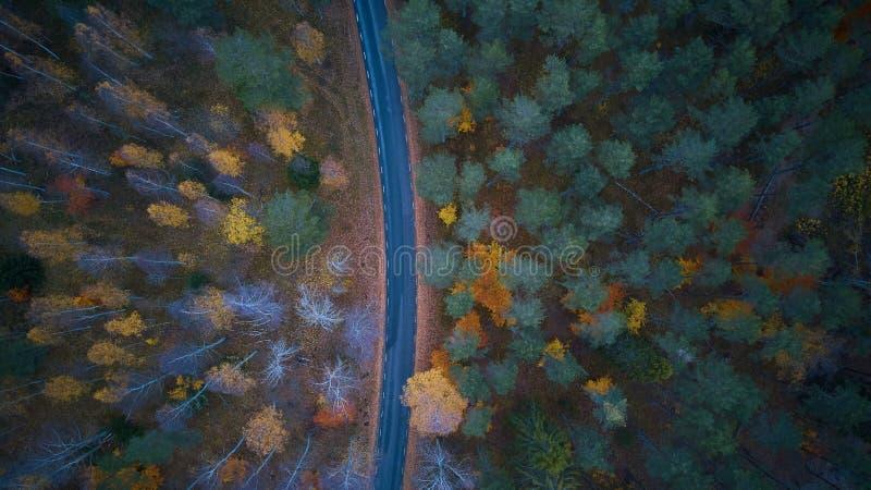 在色的秋天森林鸟瞰图的路 免版税图库摄影