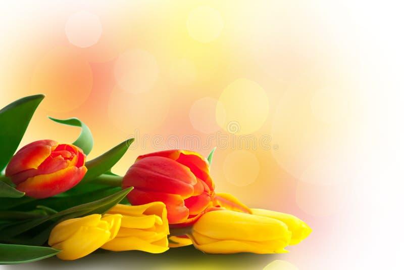 在色的Bokeh背景的春天郁金香 免版税库存图片