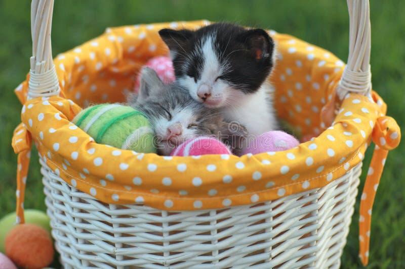 在节假日复活节篮子的可爱的小猫 免版税库存图片