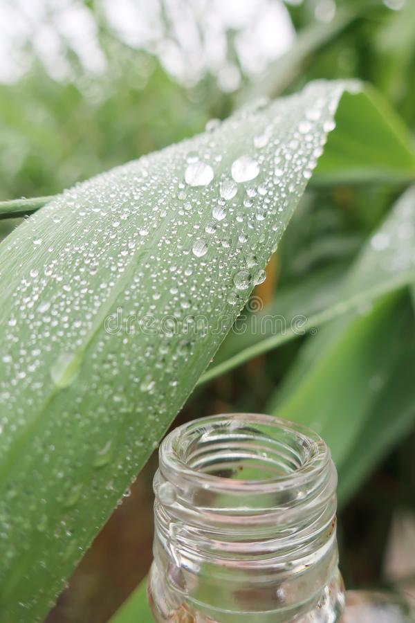 在芦苇叶子的雨珠 免版税库存照片