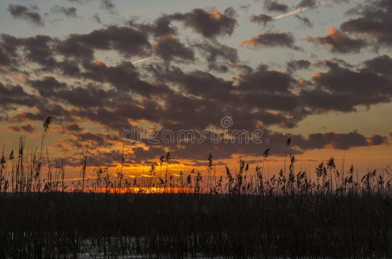 在芦苇的日落 库存图片